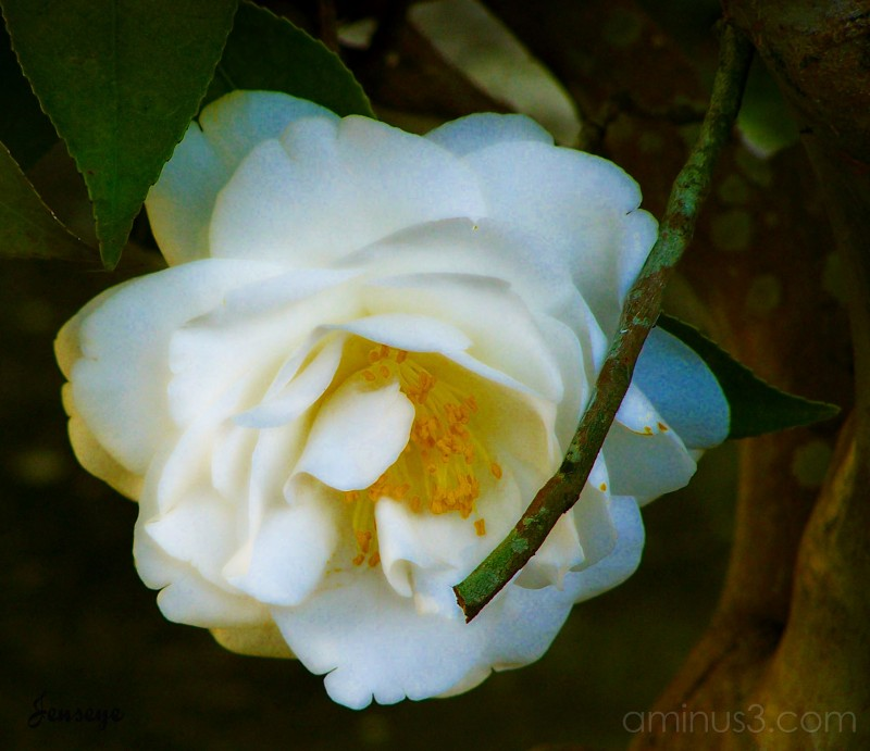 Graveyard Flower