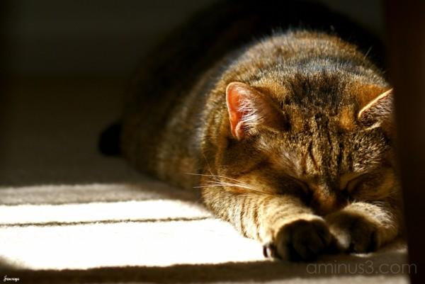 Tabby Cat Named Winnie
