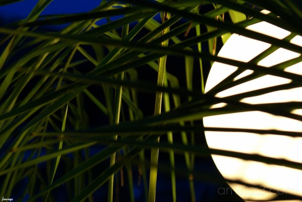 Palm Fronds and Light