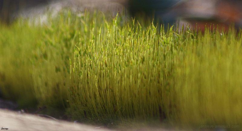 plant grass fungus lichen nature moss