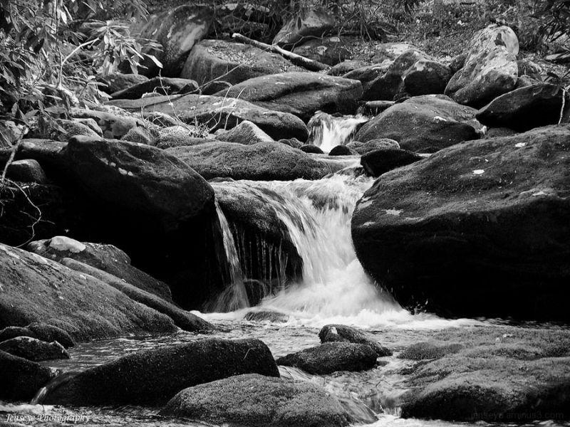 Landscape Woods Jakes Creek Great Smoky Mountains