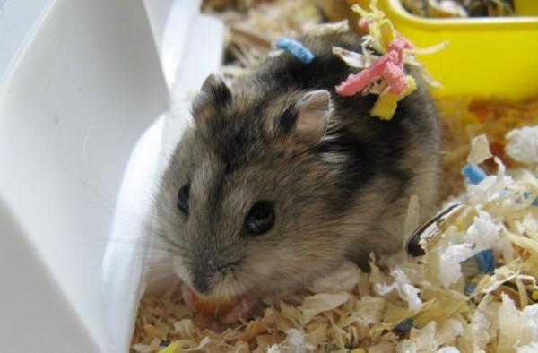 Lila comiendo maiz