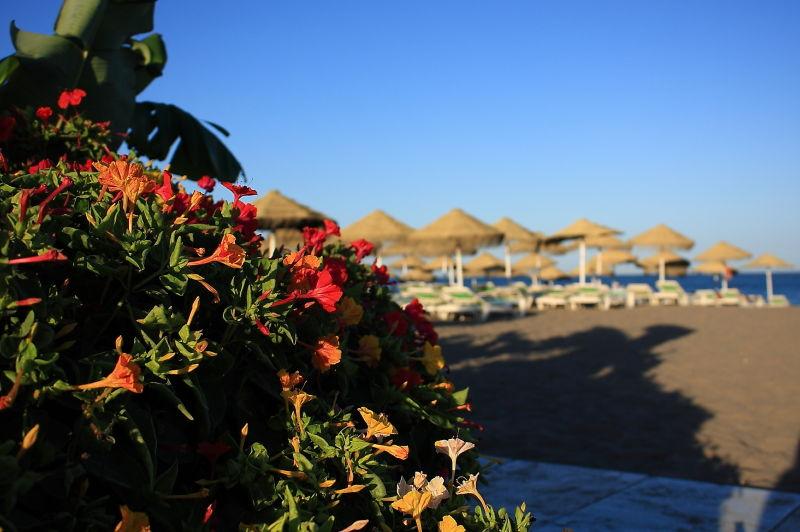 flores playa beach