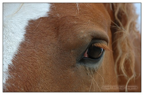 In a horse&#039;s eye