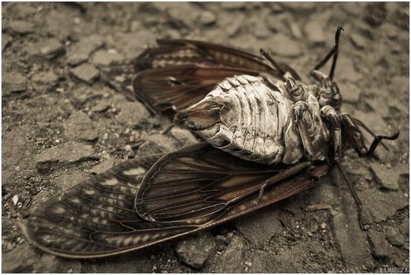 Fallen (IV)