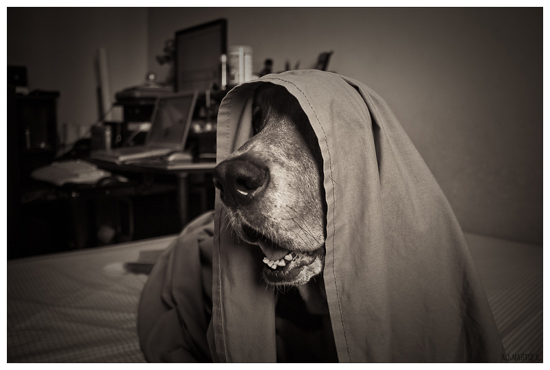 Darth B'Hound
