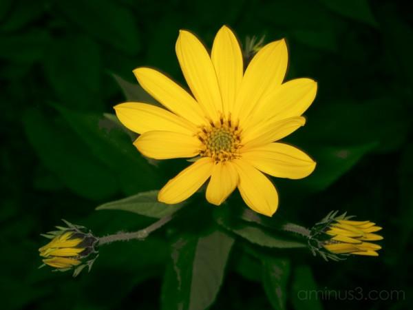 Flower Hug