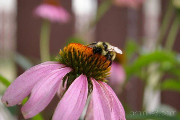 Flower Bee pink