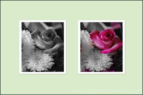 Roses Presented