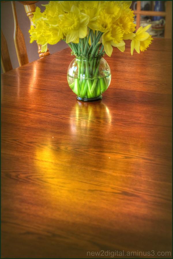 Daffodils 5/5