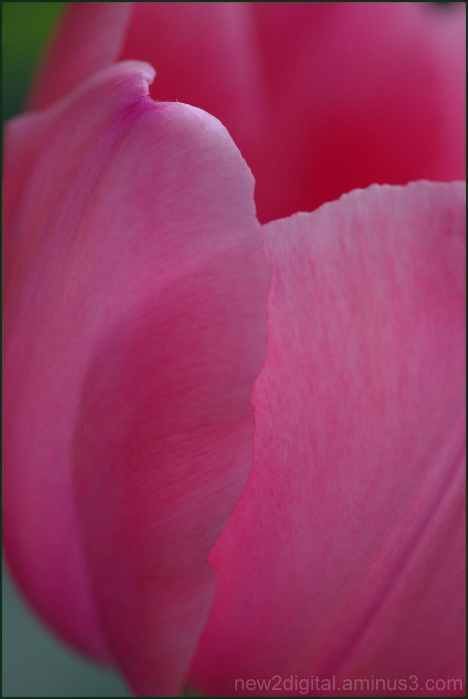 Pink Petal Pusher