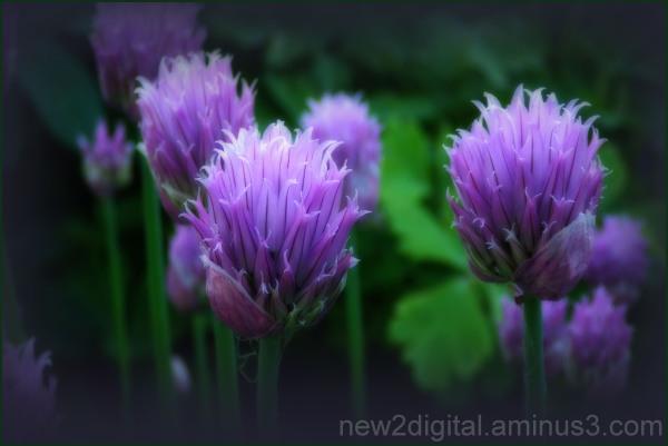 From My Garden 1/4
