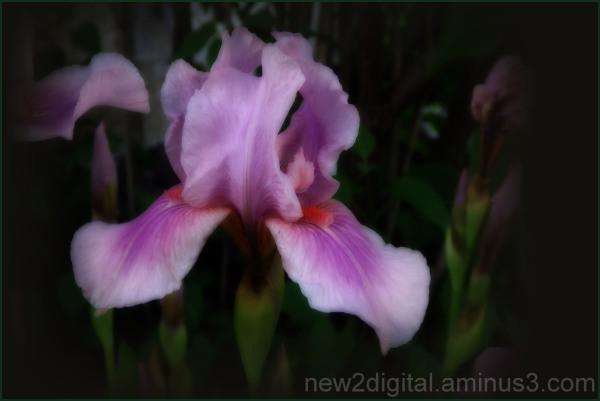 From My Garden 3/4