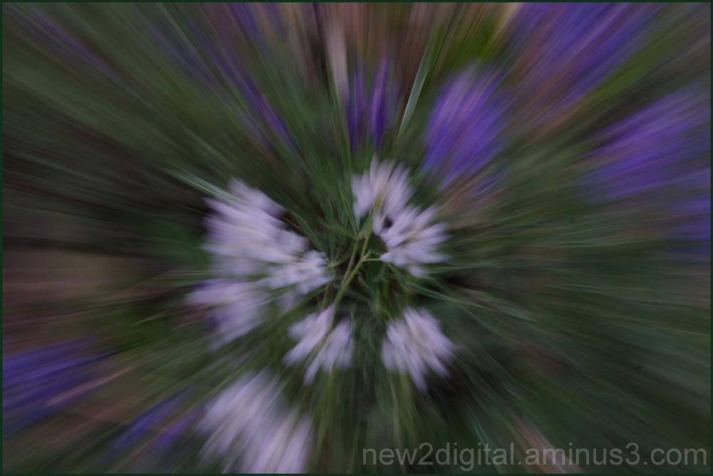 Flower Rush 2/2