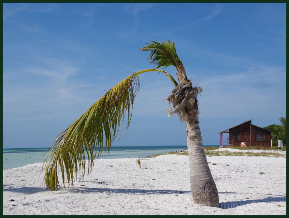 Palm Tree and Sand