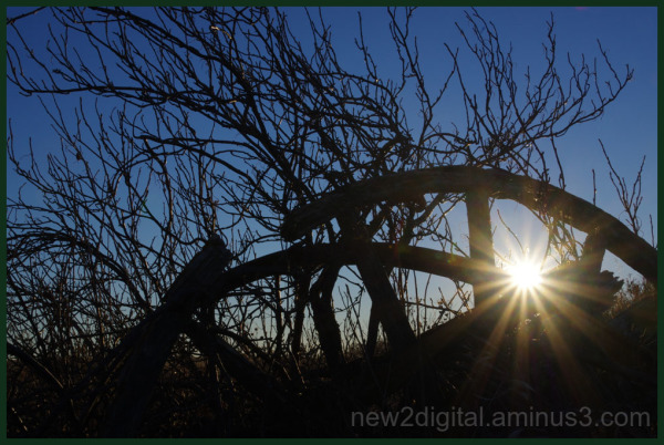 Wagon Wheel and Branches