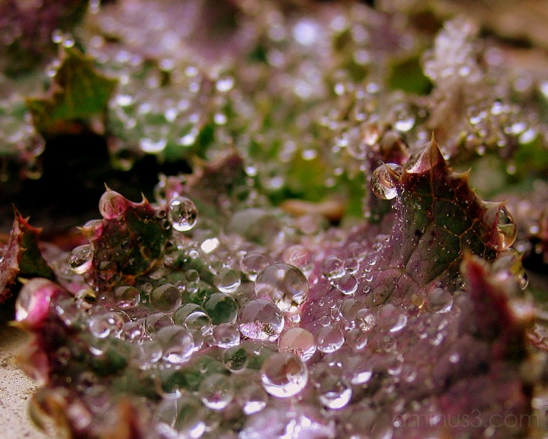 Morning Dew #2