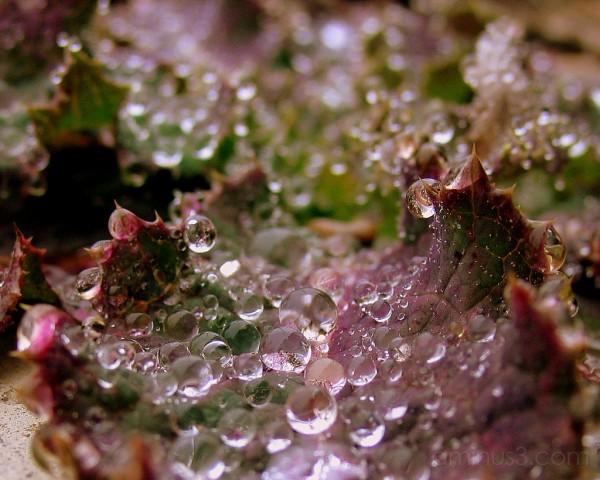Morning Dew #2