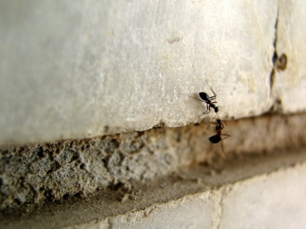 ant said:hang on buddy!