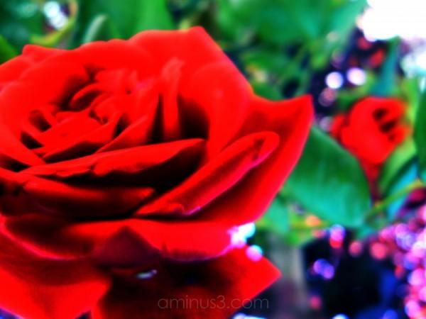 flor saturada