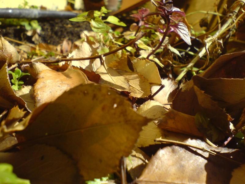 Hojas, Leaves