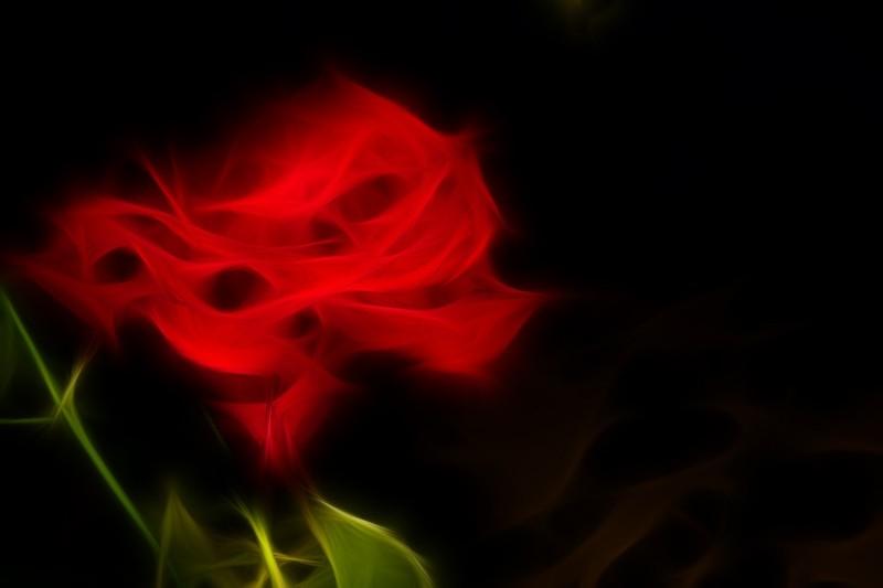 Rosa etérea   /   Ethereal rose