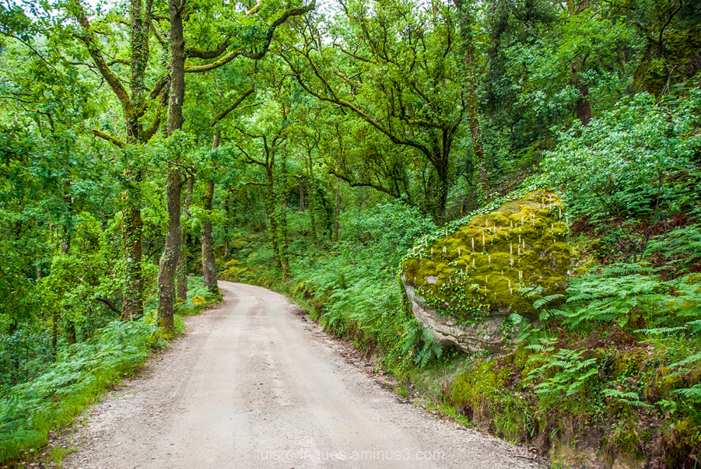 Gerês Portugal National Park Mata da Albergaria
