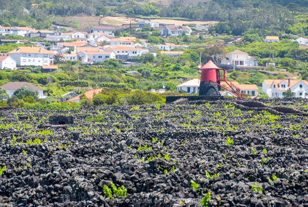 Pico Island Azores Portugal vineyard