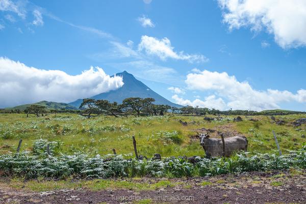 Pico Mountain Island Portugal Azores Açores