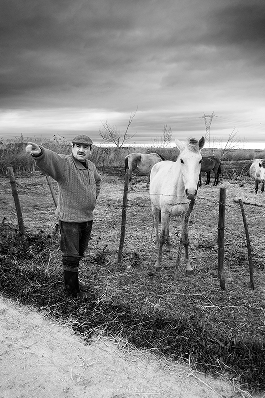Horse Ribatejo Portugal