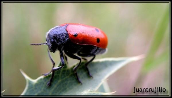 Bug Macro: Close...