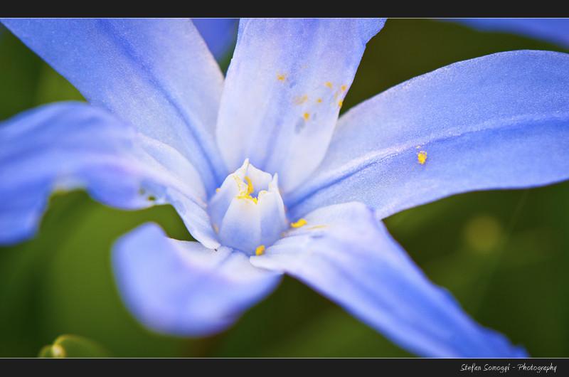 Flowers Macro III
