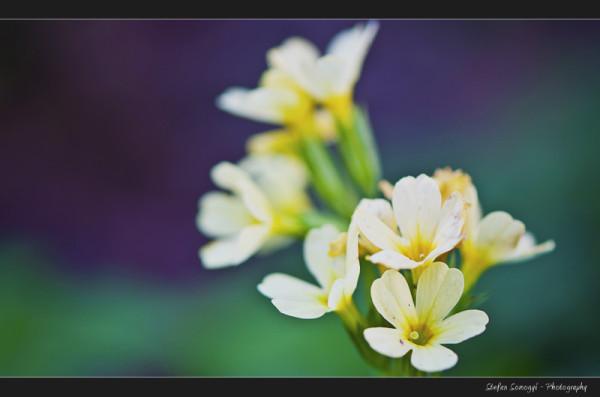 Flowers Macro VIII