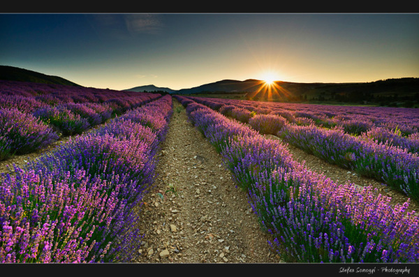 Sault, Vocluse, Provence, France