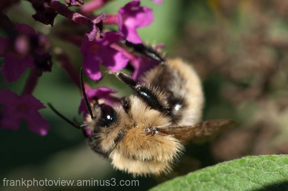 Macro bee