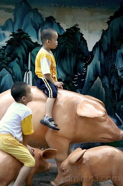 kids riding pigs