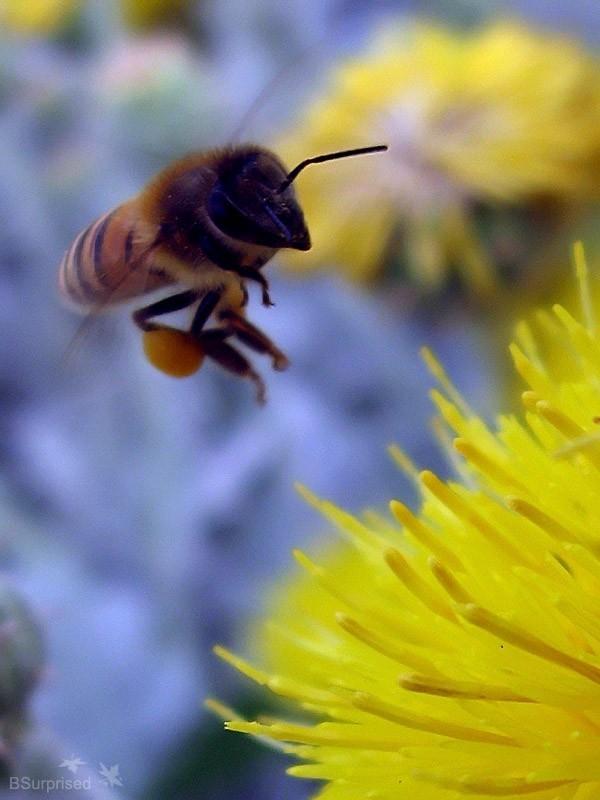 Bee Story (I)