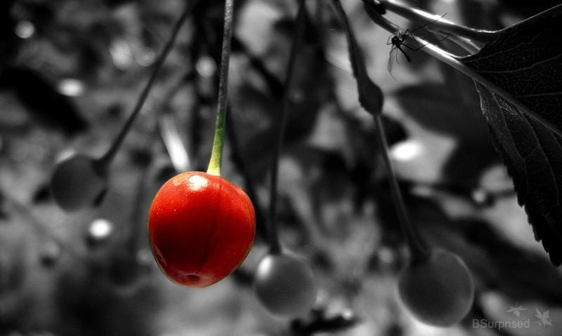 [Black] Cherry To Be