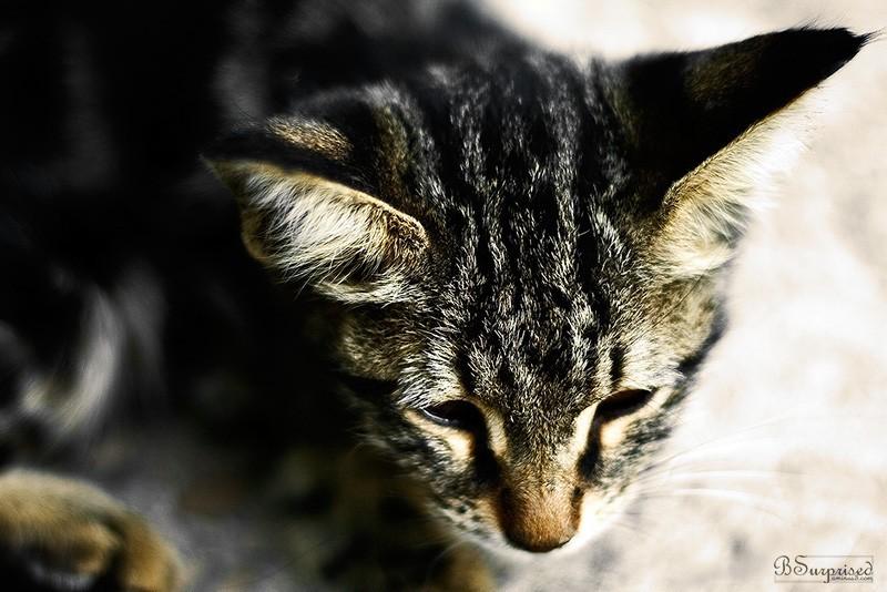 Shy Cat