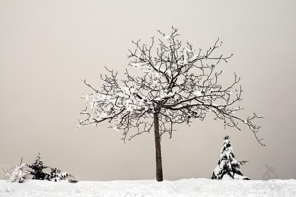 Tale of a Frozen Tree (I)