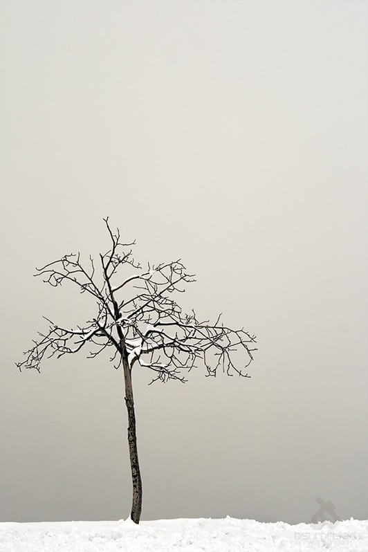 Tale of a Frozen Tree (II)