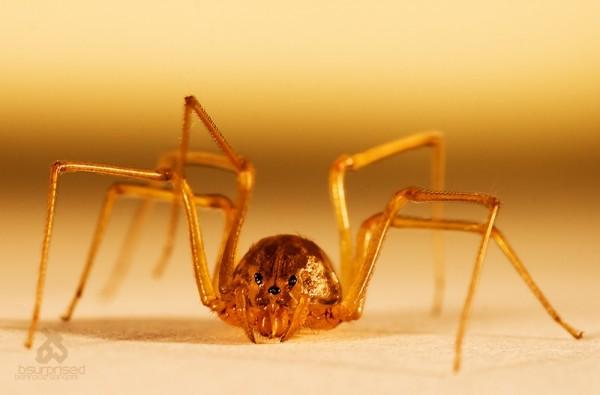 I, Spider
