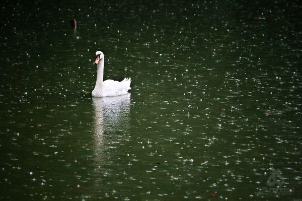 The Rain Must Fall