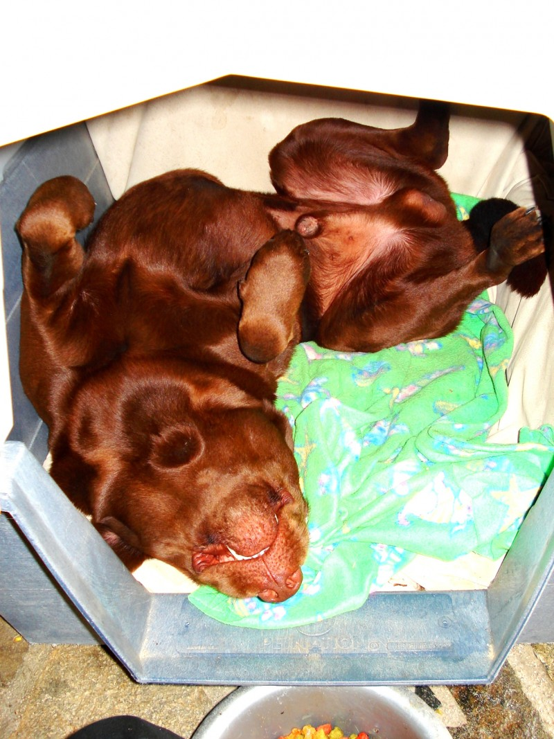 Funny dog of patricia...