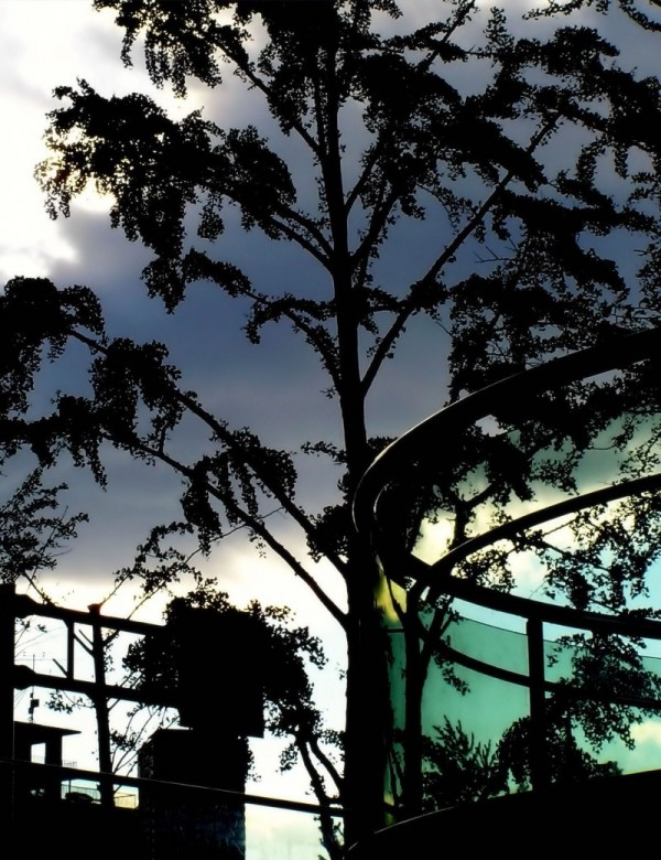 silhouette street tree blue umeda Osaka Japan