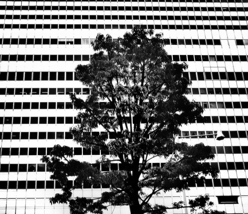 osaka umeda japan building skyscraper tree
