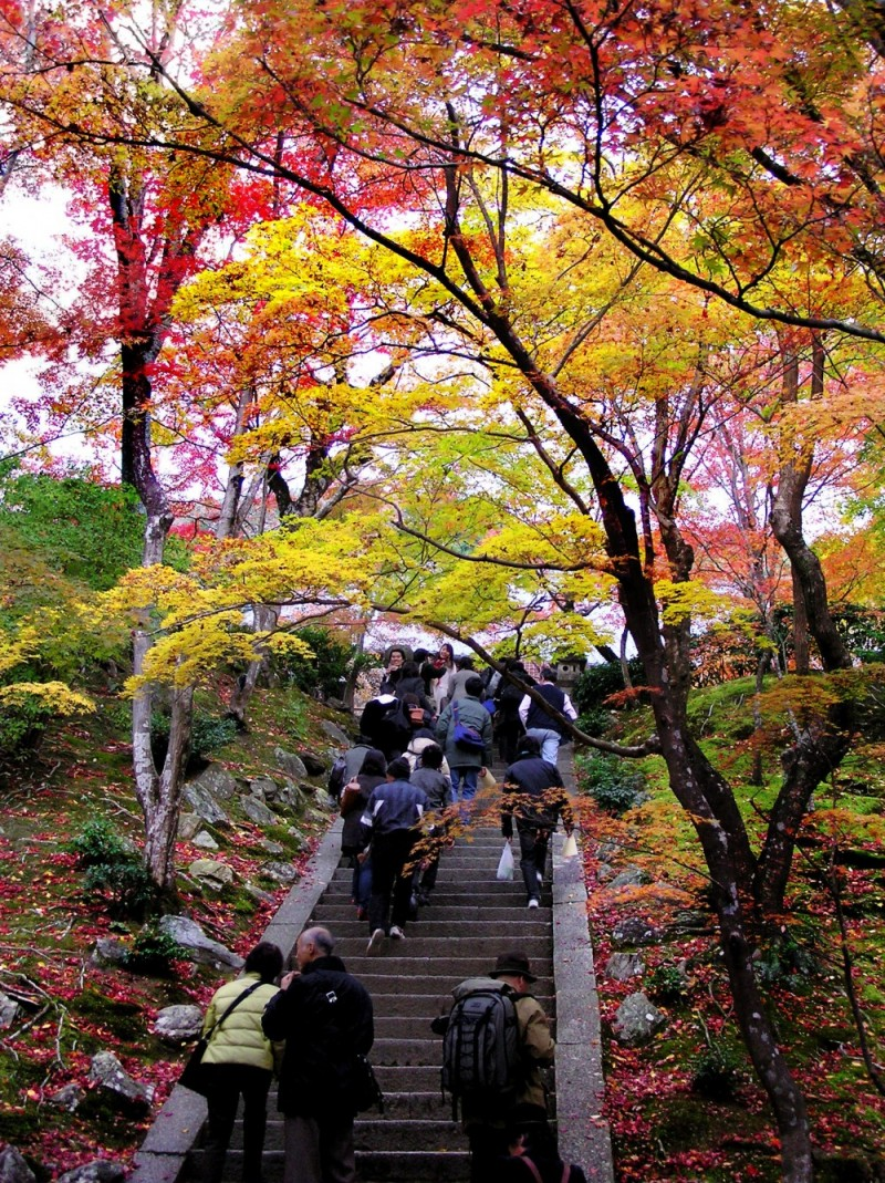 temple Arashiyama, Kyoto garden autumn leaf