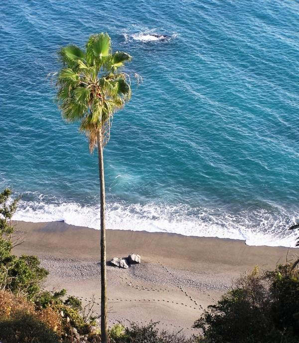Katsurahama beach Kochi palm