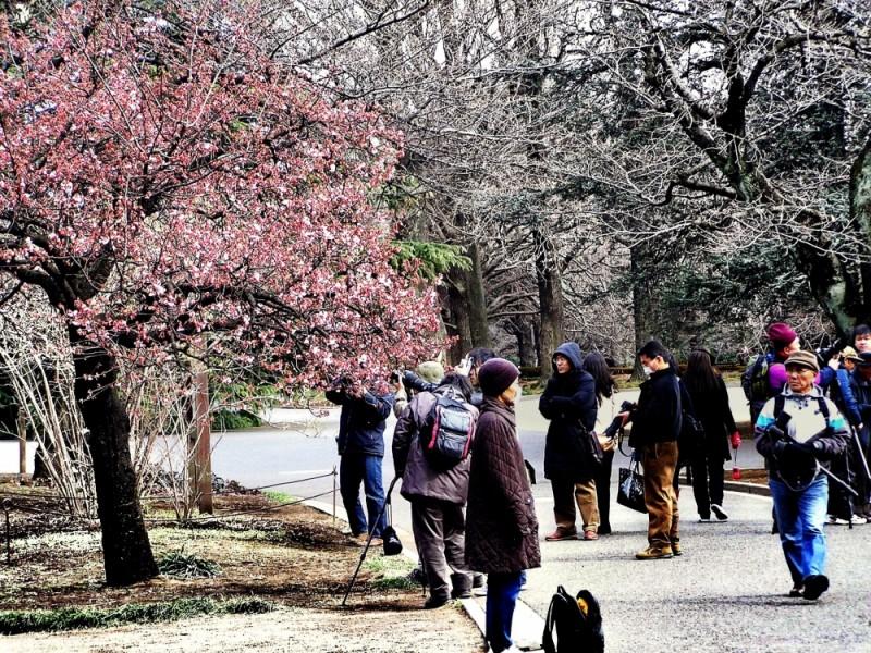 Shinjuku park blossom queue Tokyo Japan