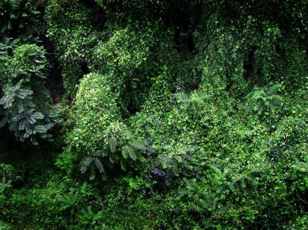 Nada Kobe vegetation greenery